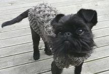 Brussels Griffon Love / Brussels Griffon love! // Best in Shore sells eco-friendly, block-printed paper and textiles to generate funds for small, independent animal rescue organizations. www.etsy.com/shop/BestInShore
