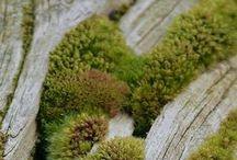 Moss / Mossy Beauty   http://www.facebook.com/kusamono
