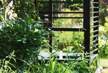 My Garden / The Backyard