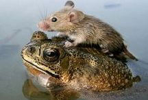 frogs, Frogs, FROGS And Toads too! / Frogs and toads are so odd and unusual and sometimes comical!