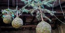 Kokedama Art / Kokedama e Perle di Muschio. String Garden. Un'idea ecologica per abbellire gli interni, spazi poetici e naturali, dalla tradizione Giapponese all'Interior Design.