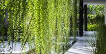 Plant - Flower - Green