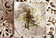 MUNDO FLORES Y PLANTAS / flores, flowers, margaritas, iris, rosas, alelies, plants