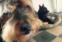 MUNDO BAJOZ Y BRILLOL / Perro, perros, dog, dogs