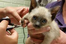 Felines / Our feline patients!