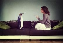 Oh My Penguin! / by Tabatha Long