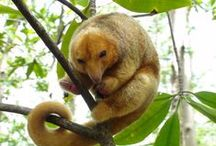 Wildlife in Costa Rica / Some of the beautiful and exotic species that you can enjoy while visiting Costa Rica.