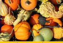 Fall theme / Autumn or fall, it's a beautiful season!