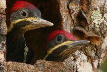 birdS / BiRdS, bIRDs, BBiRDS and....