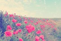 >>Wallpaper <<
