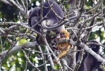 Animals of Khao Sok National Park / Various animals encountered in Khao Sok National Park in Southern Thailand.