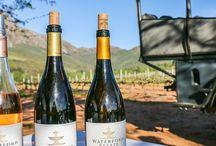 Wein & Reisen / Wein und Reisen: Hier stelle ich meine Lieblings-Weinregionen vor mit vielen Genuss-Tipps und Reiseinfos für Kurztrips und Urlaub beim Winzer. #reise #reisen #weintourismus #weinreisen #genussreise #reiseblog #reiseblogger