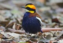 Birding in Southern Thailand / Some of the many birds we see on our birding tours in southern Thailand