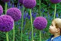 Flora, Gardens & Backyards / by Barbara Lott