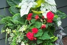 Plants: Container Gardening & Hanging Baskets / by Michele Mettey Jones