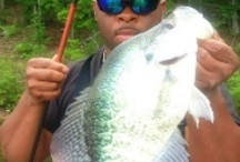"""Big Crappie / Big Crappie often referred to as """"Slabs"""""""