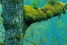 Luonnossa