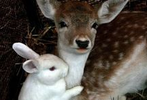 Bambi, Thumper & Flower / All things deer, rabbit & skunk related...Please keep pins board related. Duplicates or inappropriate pins will be deleted without question or notification which could result in repeat offenders being blocked from the board. Please, don't let this happen...