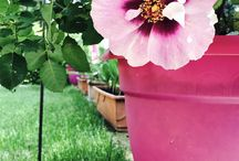 Outdoor & Garden / Outdoor e gardens