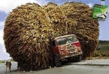 Freight Pics / by Waldo orangutrans