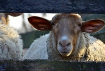 The Farmyard / What's a farmhouse without farm animals?