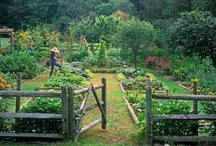 In The Garden / I vow to do more in my garden this year.