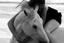 HORSES MY LOVE