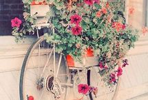 Bicycles in Bloom / To all my followers, please pin as much as you like , there is no limits of pins, Non FOLLOWERS THAT KEEP ON PINNING AND DONT FOLLOW I WILL BLOCK YOU / by Gabriela Ferreira