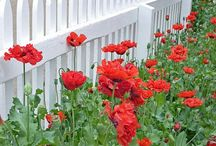 Picket Fence / To all my followers, please pin as much as you like , there is no limits of pins, Non FOLLOWERS THAT KEEP ON PINNING AND DONT FOLLOW I WILL BLOCK YOU / by Gabriela Ferreira