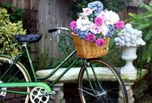 Bicycles In Bloom