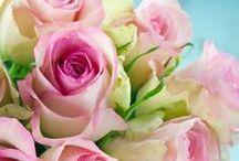 růže / roses