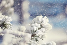 Winter - I Love Snow!