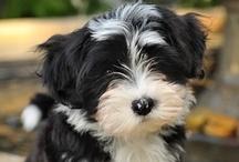 Animals - Pups