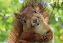 Squirrels / by Debbie Miller Smith