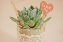 Dream wedding/FAVORS