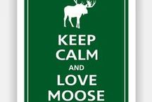 Mooses! / moose, obviously. they rock.  / by Heather Nickerson