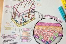 SYSTEMS: Integumentary / teaching the integumentary system, links, resources and other goodies