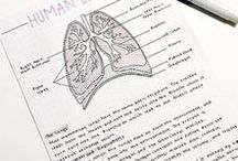 SYSTEMS: Respiratory / teaching the respiratory system, resources, links and other goodies