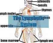 SYSTEMS: Lymphatic & Immune / lymph related links, resources and videos
