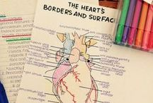SYSTEMS: Cardiac / heart links, resources & videos