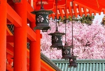 Japan / by Dao V.