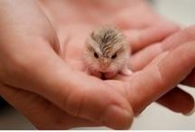 We Love Animal Babies Too!