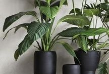 Plants + Pots / Ideas and inspiration for the green fingered (and not so green fingered) to use plants to decorate your home.