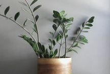 Flora / Ideas and inspiration to decorate your home with beautiful and unusual flowers, grasses and greenery.