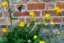 Hagen vår / Blomster og grønt