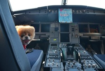 Travel with Furry Friends