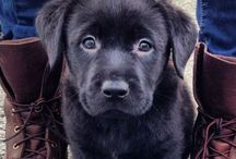 <3 / Mostly labs and other cute things