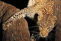 Africa Uncut / The wonders of Africa