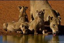 Kalahari Magic