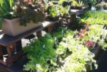 Gardening and Wellbeing